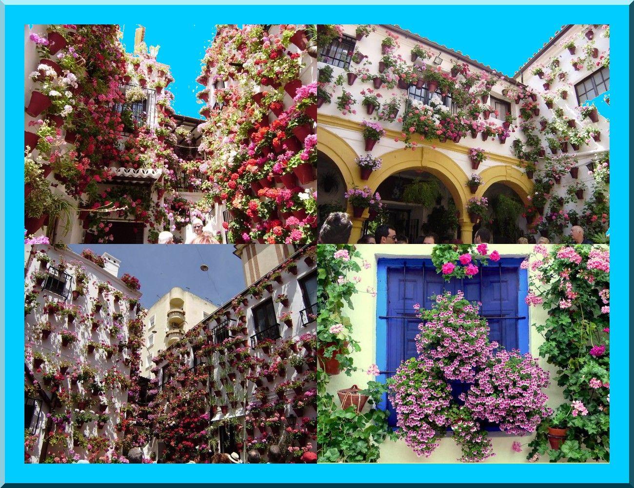 Image du Blog cargolade.centerblog.net